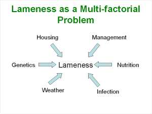 #5 Lameness is Multifactorial