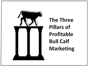 Three Pillers of Bull Calf Marketing