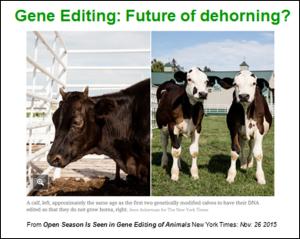 gene editing2