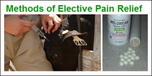 methods of pain relief