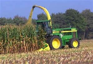 silage corn harvest