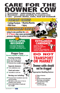 care for downer cow poster