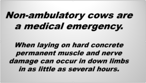 non-ambulatory cow medical emergency statement