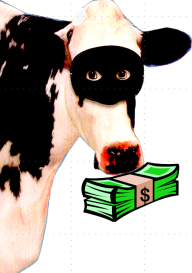 robber cow
