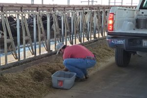 Person working with cattle feed