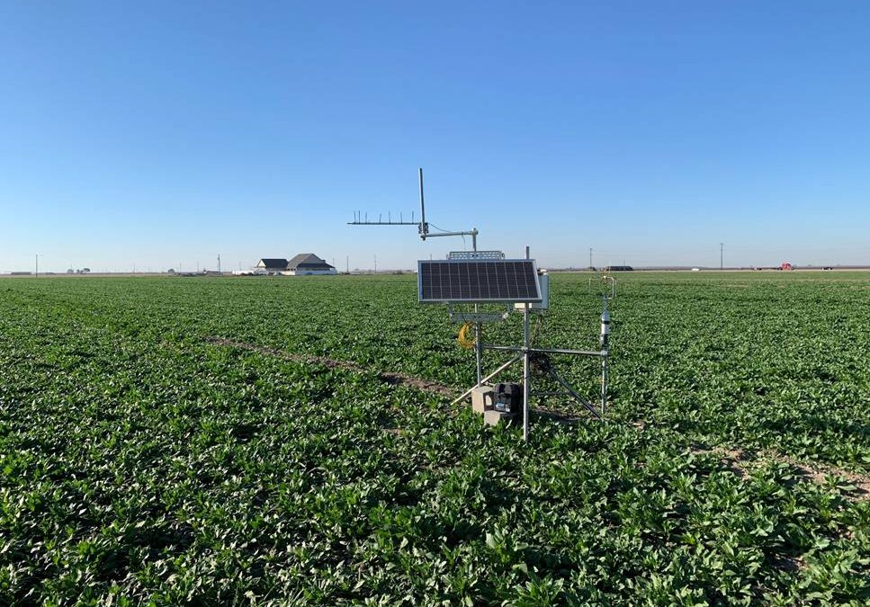 Growing Sugarbeets on California Dairy Farms